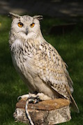 Bird of prey liability, Birds of Prey liability insurance