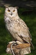Bird of prey liability, Birds of Prey liability insurance