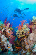 , Scuba Diving Holiday Insurance