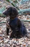 Sprocker, Sprocker Pet Insurance